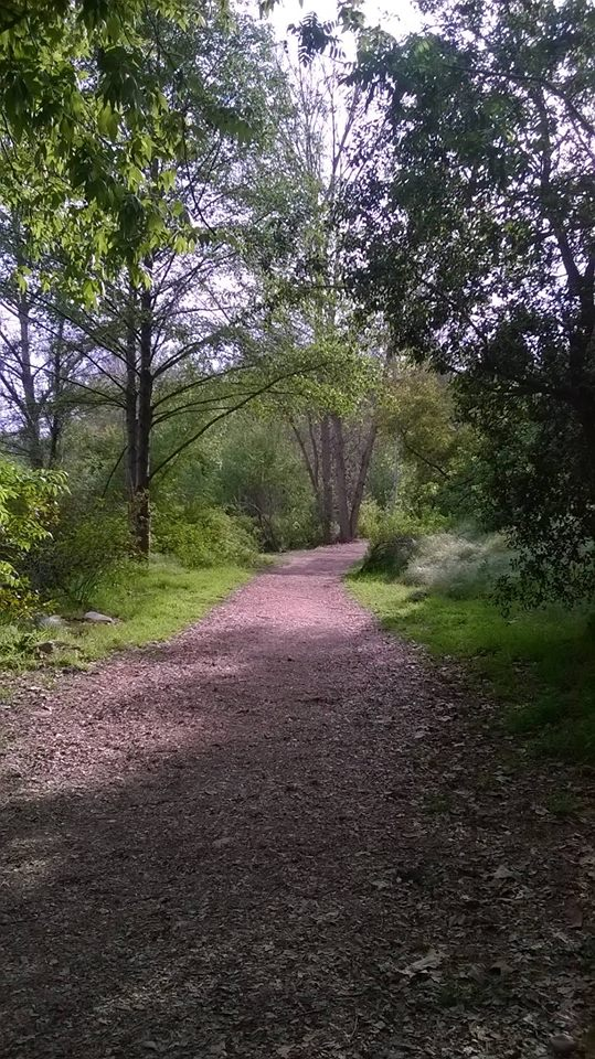 path through the trees, like exploring psychic development