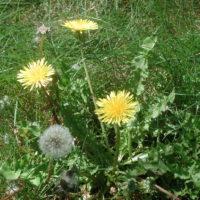 Spring Weeds Herbal Workshop with Julie James