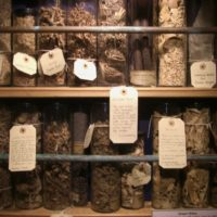 herbs for witches