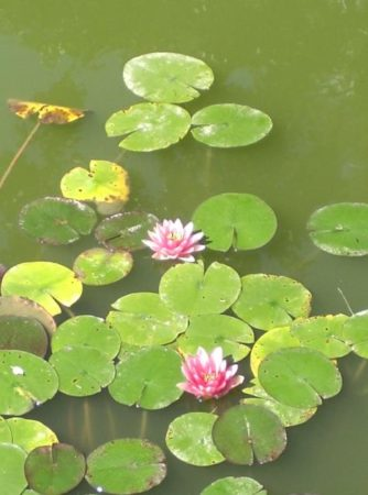 lilypads for ancestral healing workshop