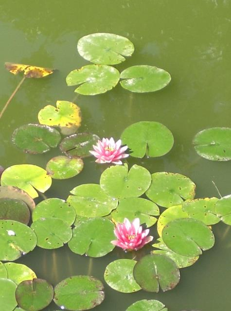 lilypads for the ancestral healing workshop